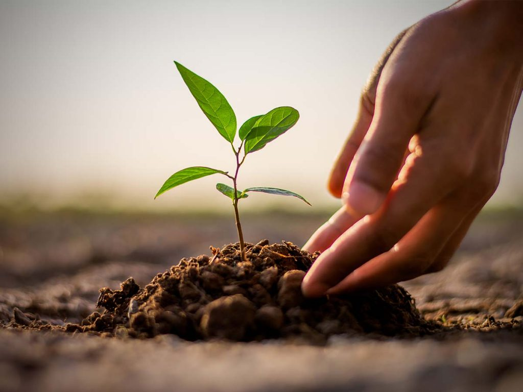 The Willows Insurance - plant a tree initiative